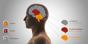 3 cerveaux 3 fondements petit 2016