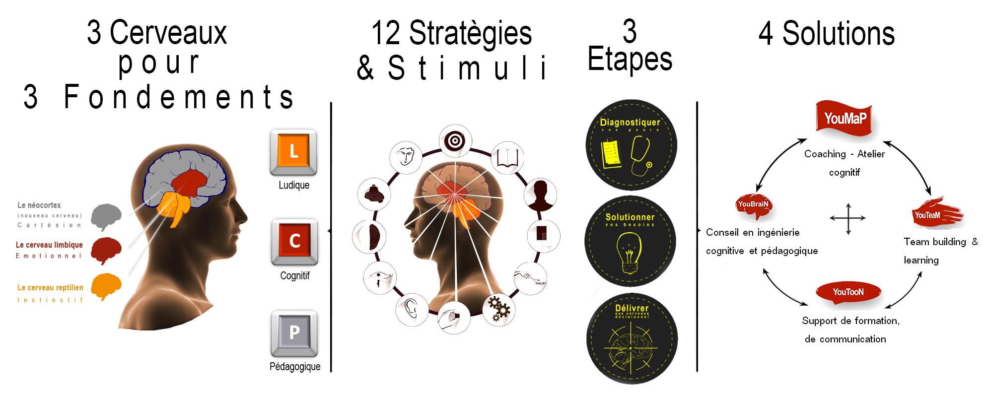 3 cerveaux pour 3 fondements stratégies étapes solutions 2016 4